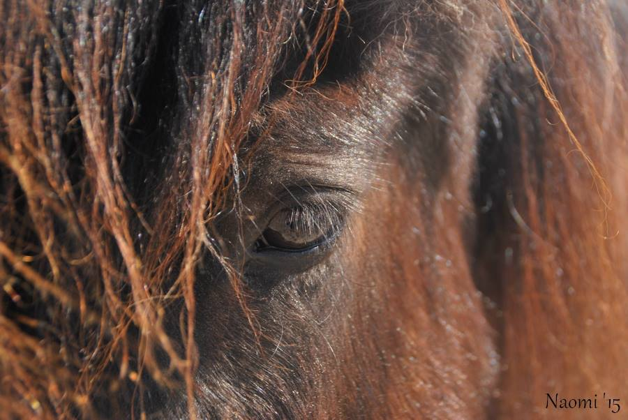 Therapieen voor het Paard